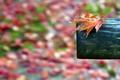 Картинка листья, макро, фон