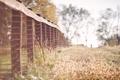 Картинка трава, забор, ограда