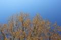Картинка небо, природа, дерево, весна
