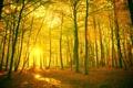 Картинка листья, лес, обои, деревья, солнце, природа, wallpapers