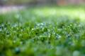 Картинка трава, вода, капли, макро, природа, роса, боке