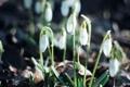 Картинка листья, капли, макро, цветы, природа, земля, весна