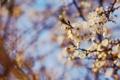 Картинка листья, цветы, ветки, природа, весна, Spring wallpaper