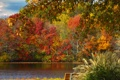 Картинка осень, листья, деревья, пруд, парк, скамья
