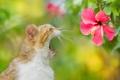 Картинка цветок, кот, фон, зевает