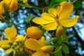 Картинка небо, листья, цветы, обои, ветка, лепестки, тычинки