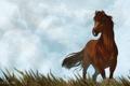 Картинка небо, трава, животное, лошадь, арт, грива, хвост