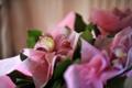 Картинка розовый, цветок, нежный, божья коровка, цветы