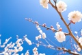Картинка небо, макро, ветки, вишни, сакуры