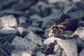 Картинка макро, насекомые, природа, оса
