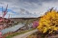 Картинка город, река, кусты, Германия, Zell, фото