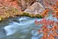 Картинка листья, осень, камень, поток, ручей, ветка
