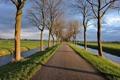 Картинка дорога, деревья, пейзаж, канал