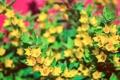 Картинка розовый, Цветы, зелёный, жёлтые, puxa, много цветков