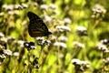 Картинка солнце, бабочка, поляна, день, травка