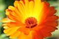 Картинка цветок, макро, оранжевый, лепестки