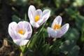 Картинка весна, красиво, цветы