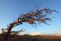 Картинка небо, пейзаж, природа, дерево