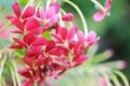 Картинка макро, цветы, лепестки, гроздь, красные