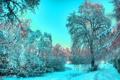 Картинка деревья, иней, зима, голубой, снег, свет