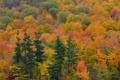 Картинка осень, лес, деревья, ель, склон
