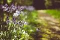 Картинка трава, цветы, лепестки, сиреневые