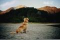Картинка пляж, собака, шерсть