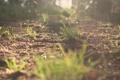 Картинка трава, земля, зеленая