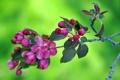 Картинка весна, природа, лепестки, ветка, макро, дерево