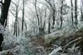 Картинка зима, иней, лес, трава, снег, деревья, ветки