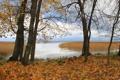 Картинка осень, листья, вода, деревья, природа, осенние обои