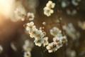Картинка солнце, дерево, весна