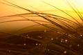 Картинка трава, капли, макро