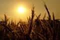 Картинка закат, природа, травы