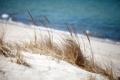 Картинка Вода, Песок, Океан, Пляж, Трава