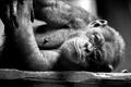 Картинка черно-белое, шимпанзе, примат, млекопитающий