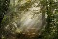 Картинка дорога, лес, свет, природа