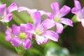 Картинка природа, растение, лепестки, цветы