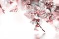 Картинка вода, бабочка, весна, цветочки, цветение, веточки