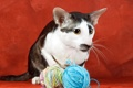 Картинка кошка, фон, нити