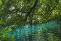 Картинка лес, вода, деревья, озеро, река