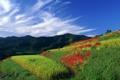 Картинка небо, трава, цветы, природа, холмы