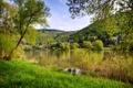 Картинка лес, деревья, река, трава.