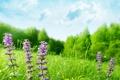 Картинка полевые, цветы, трава, деревья, лето