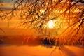 Картинка зима, иней, небо, солнце, закат, дерево
