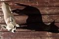 Картинка фон, тень, собака