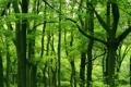 Картинка зелень, листья, деревья, природа, дерево, листва, растения