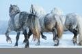 Картинка ice, snow, horses