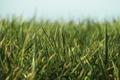 Картинка трава, макро, фото, green macro, красивые фоновые обои для рабочего стола