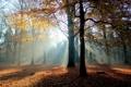 Картинка осень, лес, свет